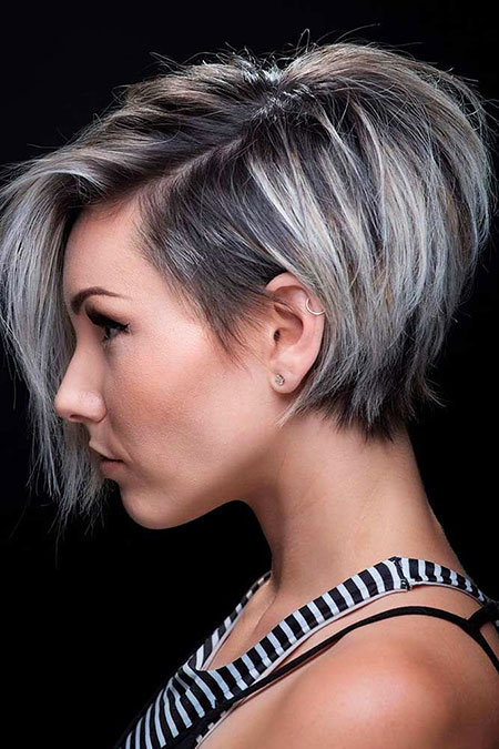 Gray Pixie Bob, Pixie Short Gray Long